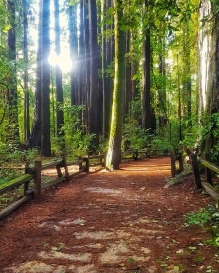 Henry Cowell Redwoods Park