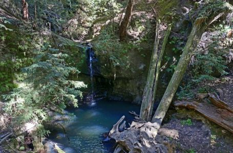 Big Basin Redwoods State Park Guide