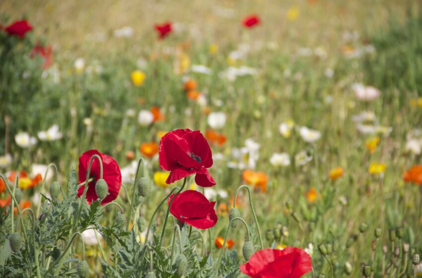 Discover the beauty of wildflowers in Santa Cruz